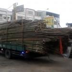 bamboo-truck-unloading