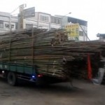 How to unload a truckload of bamboo poles